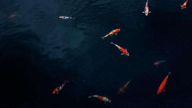 פילטר לבריכת דגים