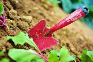 לשפר את נראות הגינה