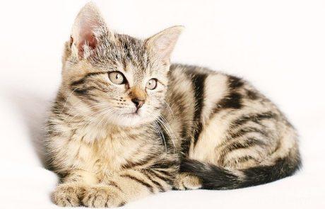 מה חשוב לדעת כשבוחרים אוכל לחתול שלכם