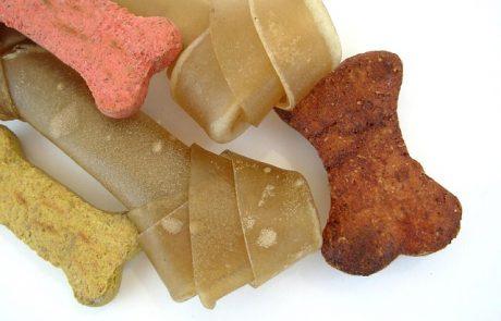פרימייר קלאב מזון לכלבים – על היתרונות והחסרונות של מזון רטוב ומזון יבש לכלבים