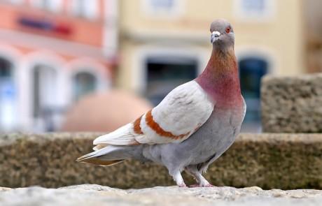 הרחקת יונים מבלי לפגוע בציפורים