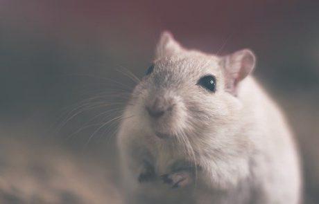 איך בוחרים מדביר עכברים