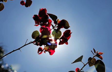 ספוטים סולאריים – ביום השמש מאירה ובלילה הספוטים מחזירים תאורה