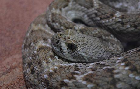 למה חשוב לדאוג לבית נקי בעונת הנחשים